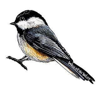 Wandsticker Meise Singvogel