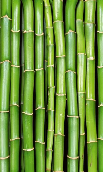 Vlies Fototapete Bambus 150x250