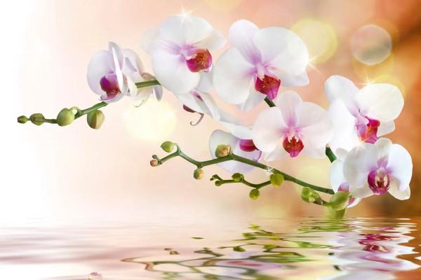 Vliestapete weiße Orchidee 375x250