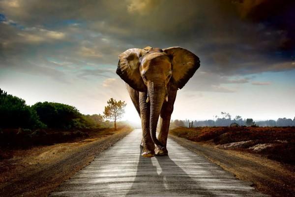 Vliestapete Elefant 375x250