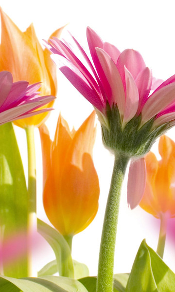 Vlies Fototapete Frühlingsblumen 150x250