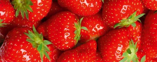 Panorama Vliestapete Erdbeeren 375x150