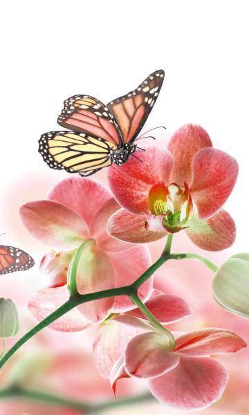 Vlies Fototapete Orchidee und Schmetterling 150x250