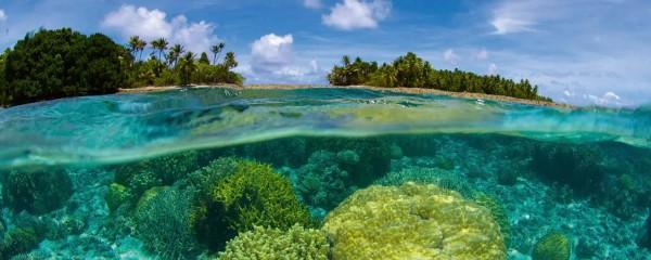 Panorama Vliestapete Korallenriff 375x150