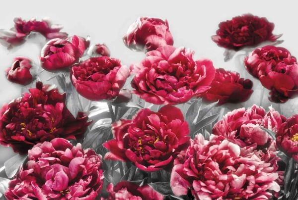Vliestapete Fototapete Blüten Verführung in rot