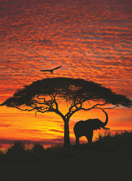 Fototapete afrikanischer Sonnenuntergang