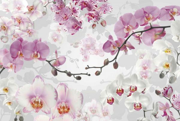 Vliestapete Fototapete prachtvolle Orchideen