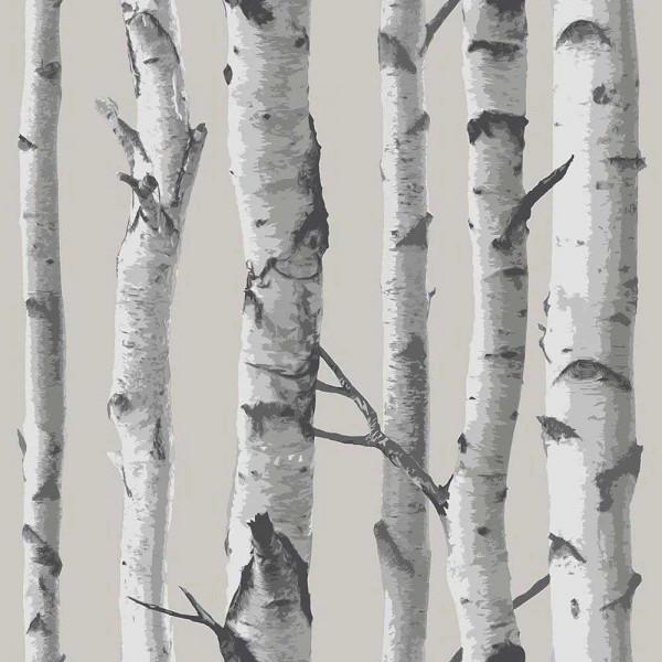 Selbstklebende Tapete Birkenstämme | tapetenwelt