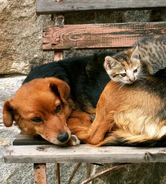Vliestapete Hund und Katze 225x250