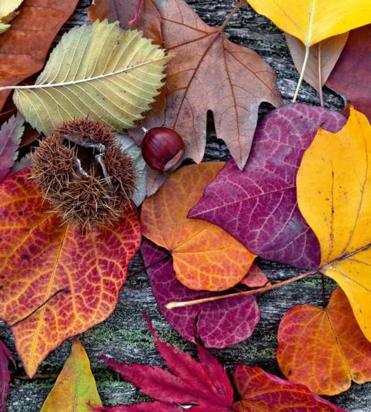 Vliestapete Herbst 225x250