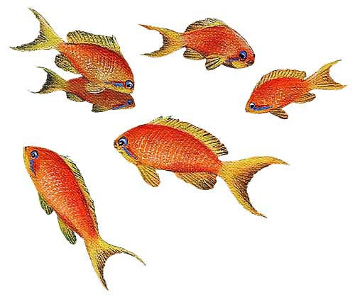 Wandsticker Unterwasser Goldfisch Walls of the Wild