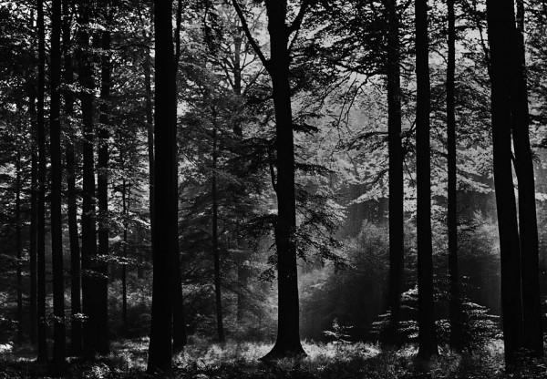 Fototapete Wandbild Avalon nebliger Wald
