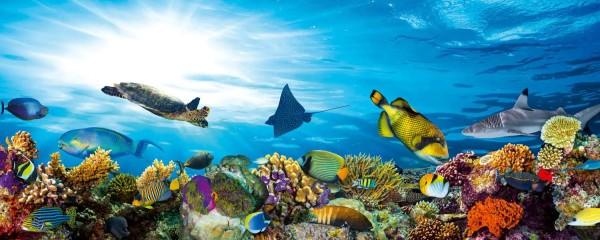 Panorama Vliestapete Fisch Meeresbewohner 375x150