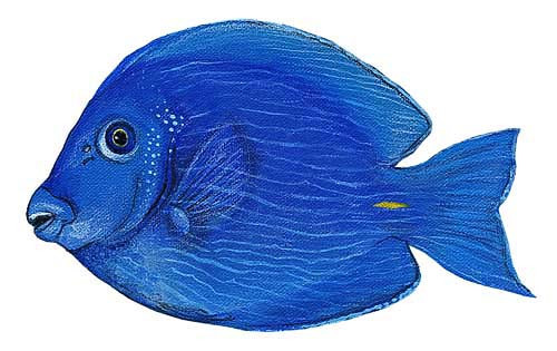 Wandsticker Paletten Doktorfisch