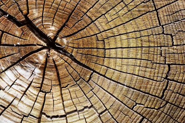 Vliestapete Holzstamm 375x250