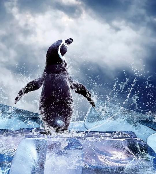 Vliestapete Pinguin 225x250