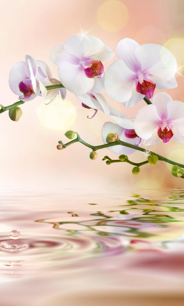 Vlies Fototapete weiße Orchidee 150x250