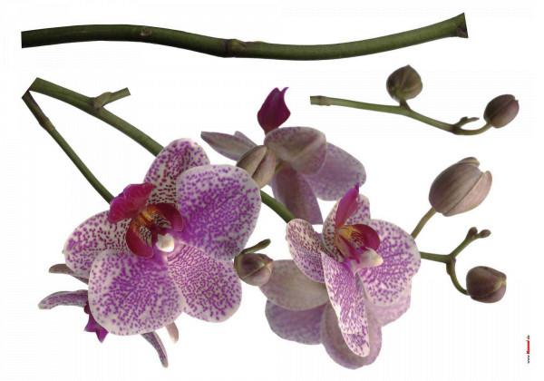 Wandsticker lila Orchidee