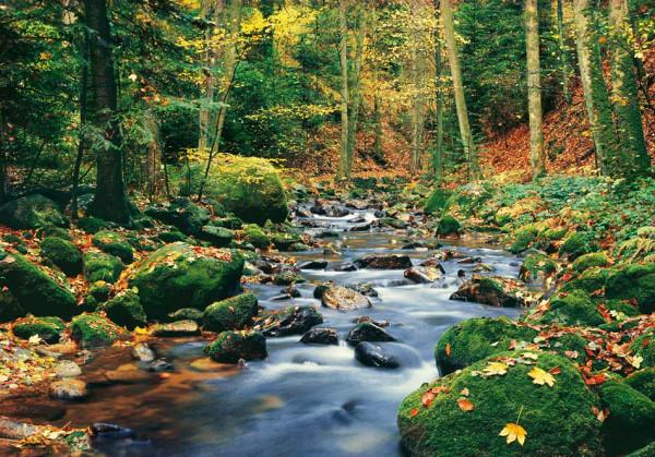 Fototapete Wandbild Waldbach Quelle