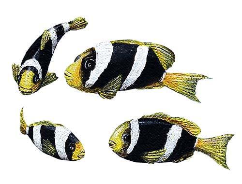 Wandsticker Clownfische Unterwasserwelt