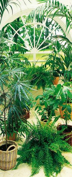 Türtapete Fototapete Türposter Wintergarten Pflanzen Palme