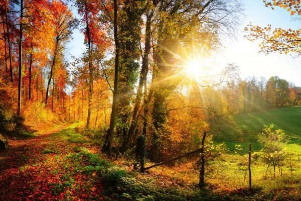 Vliestapete Herbstwald 375x250