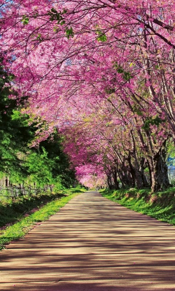 Vlies Fototapete Blüten Allee 150x250