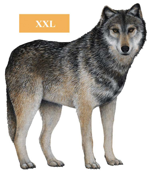 Walls of the Wild Wandsticker Dschungel Regenwald Wolf