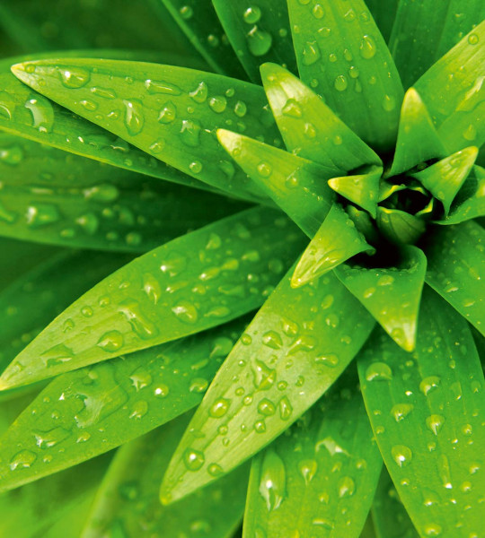 Vliestapete frische Blätter im Regen 225x250