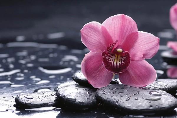 Vliestapete Orchidee 375x250