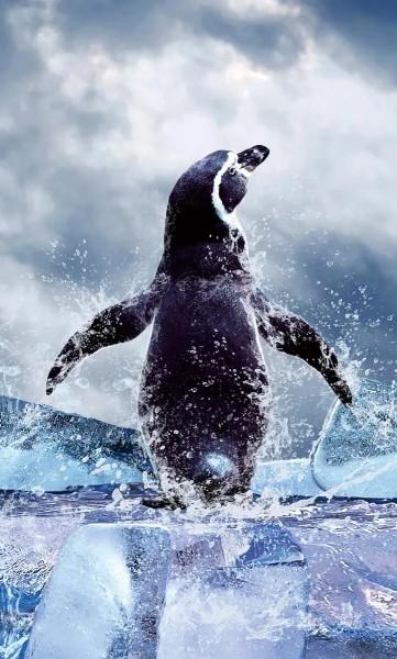 Vlies Fototapete Pinguin 150x250