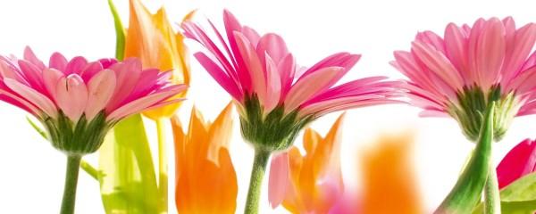 Panorama Vliestapete Frühlingsblumen 375x150