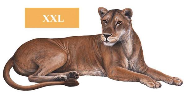 Wandsticker Dschungelwelt Safari Löwin