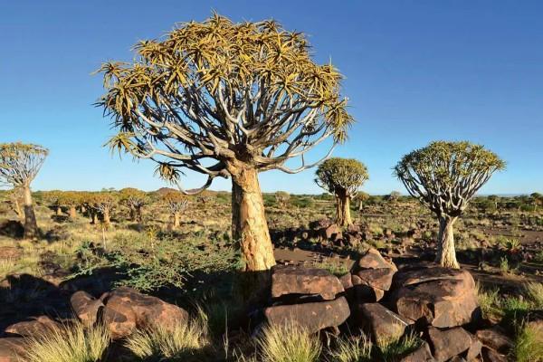 Vliestapete Wüste Namib 375x250