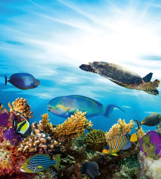 Vliestapete Fisch Meeresbewohner 225x250