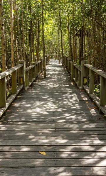 Vlies Fototapete Mangroven Wald 150x250