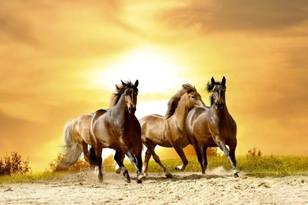 Vliestapete Pferdeherde 375x250