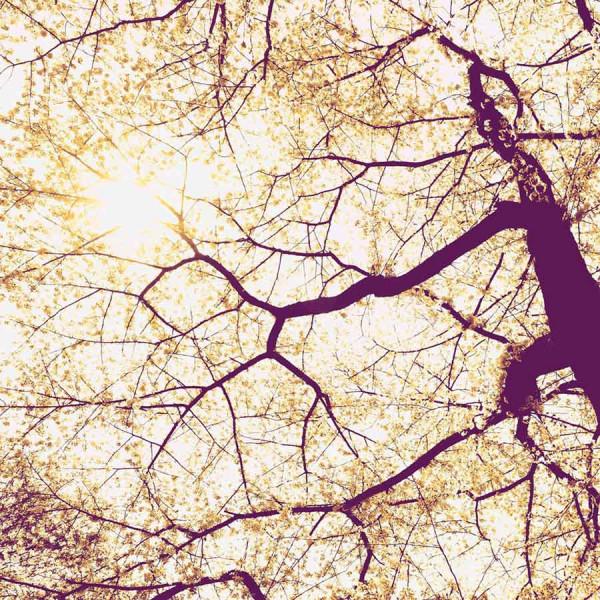 Vlies Fototapete Baumwipfel Sonnenschein