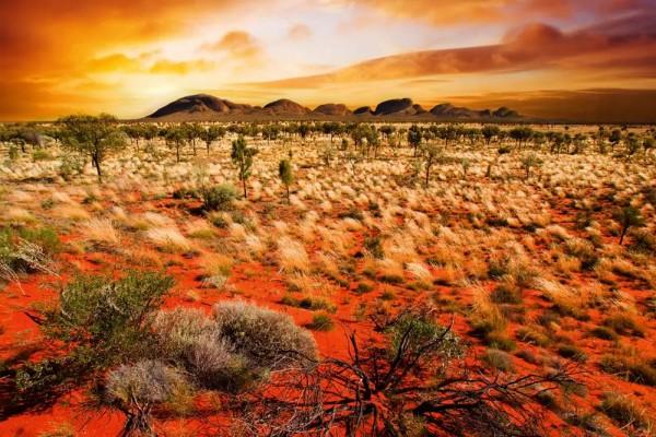 Vliestapete Australien 375x250