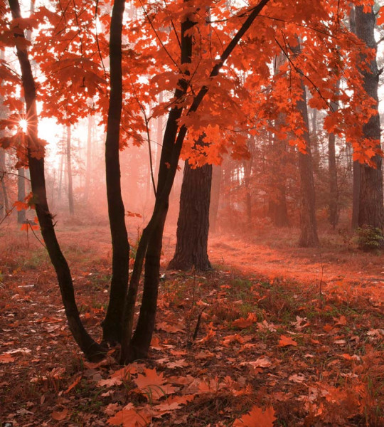 Vliestapete Nebel im Wald 225x250