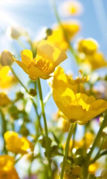 Vlies Fototapete gelbe Blumen 150x250