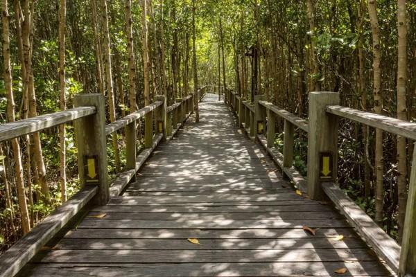 Vliestapete Mangroven Wald 375x250